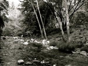 creek_bw1.jpg