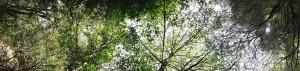 cropped-tree_banner1.jpg
