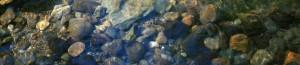 pebbles_resize.jpg