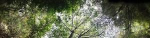 tree_banner.jpg