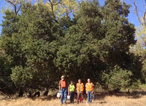 UCC's Apprentices in Ecological Restoration with a coast live oak.