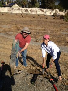 Diana Fischer with Workday Corporation and Josh Huber with Congressman Eric Swalwell's office work together to put an oak seedling in the ground.