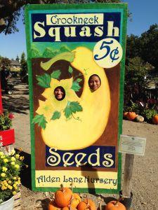 squash heads