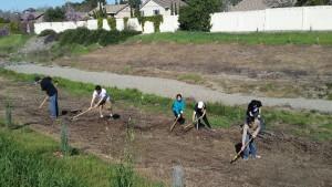volunteers raking