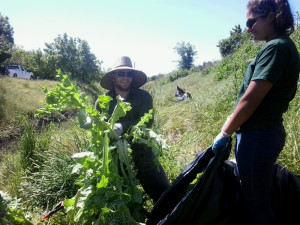 removing invasive plants