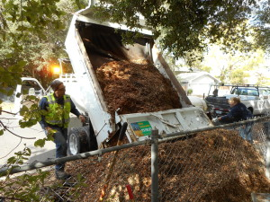 Creating our mulch pile
