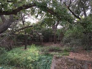 Touriga Creek  Before
