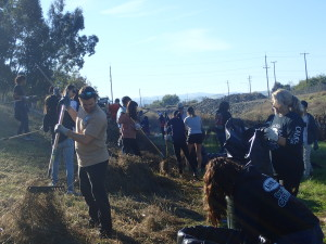 Volunteers raking Zones A, B & C